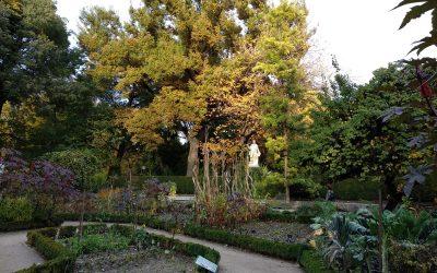 Breve historia del Jardín Botánico